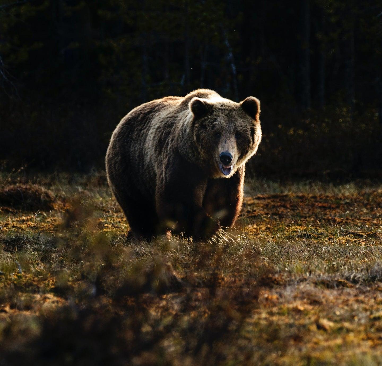 bug bear run towards camera