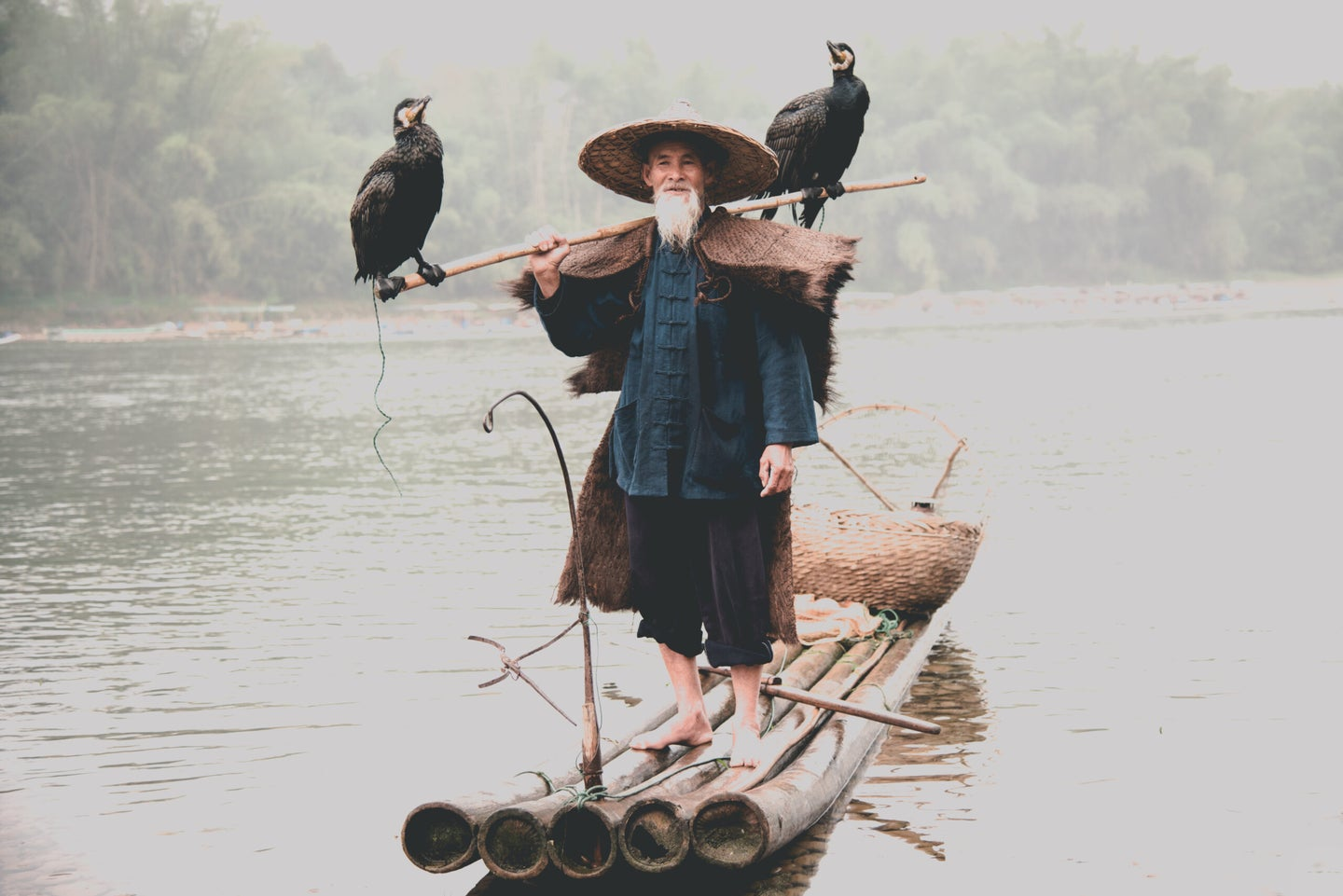 Traditional Chinese cormorant fisherman standing on a boat with two birds.