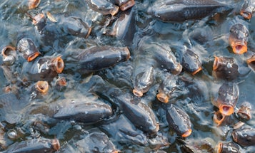 Hundreds of Common Carp in Michigan Die from Herpes Outbreak, According to MDNR