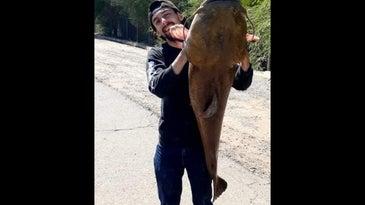 Man holds large catfish vertically