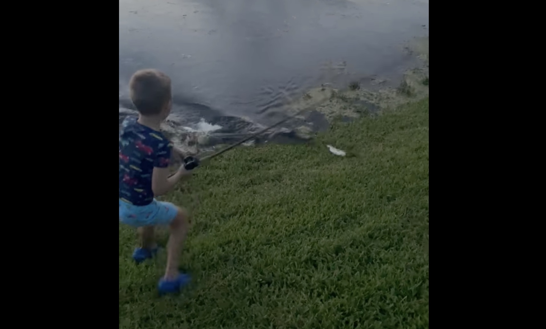 gator darts after fish