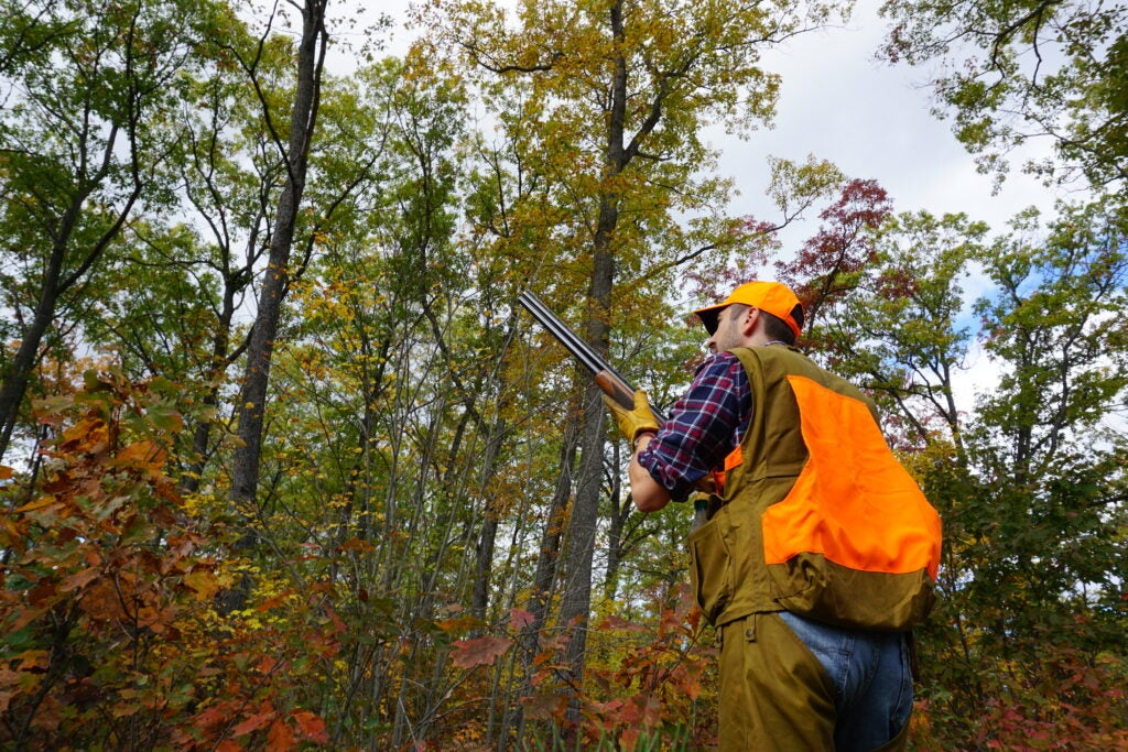 Hunter standing in the woods with a shotgun looking up.