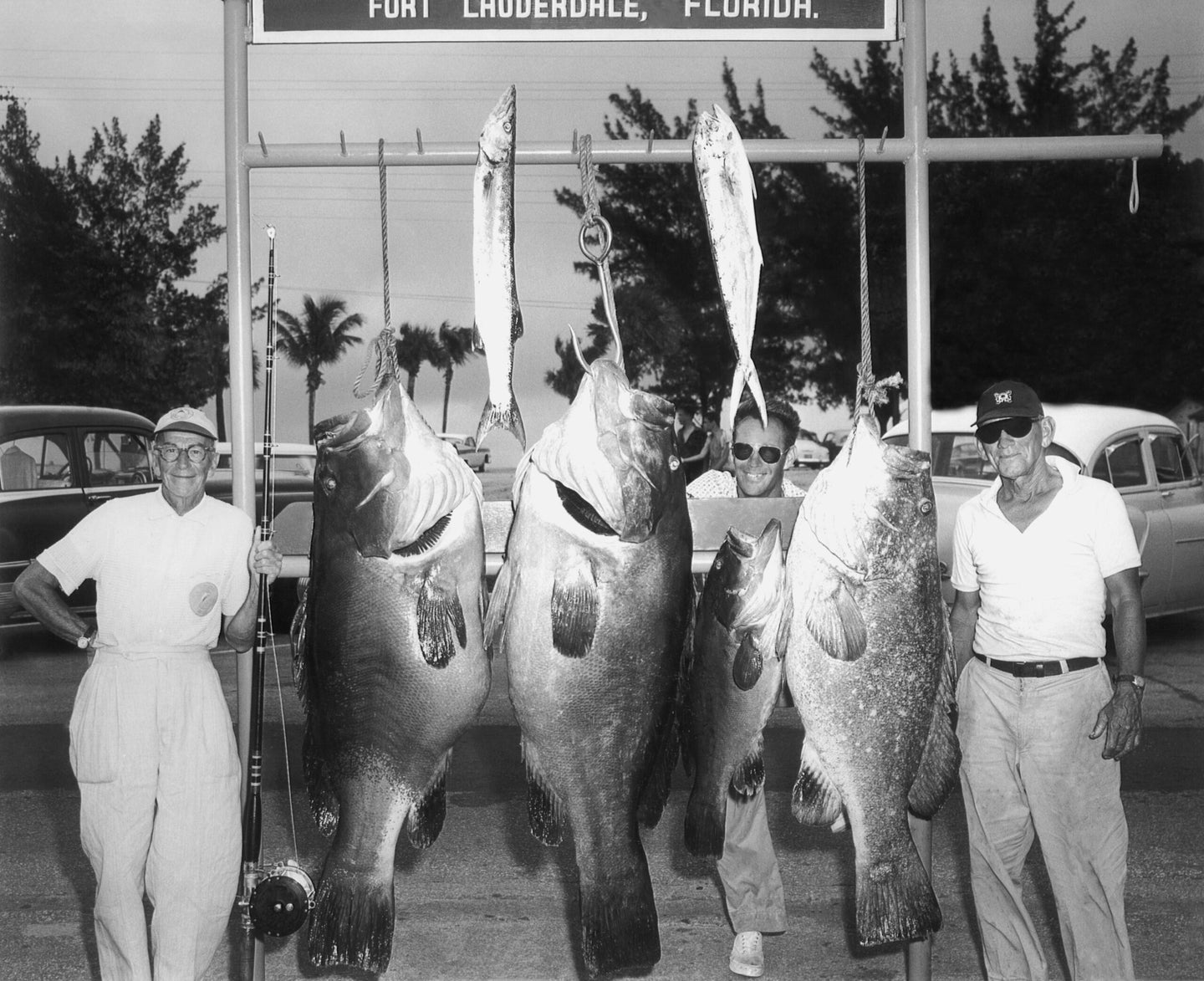 men pose with dead goliath grouper in black and white photo
