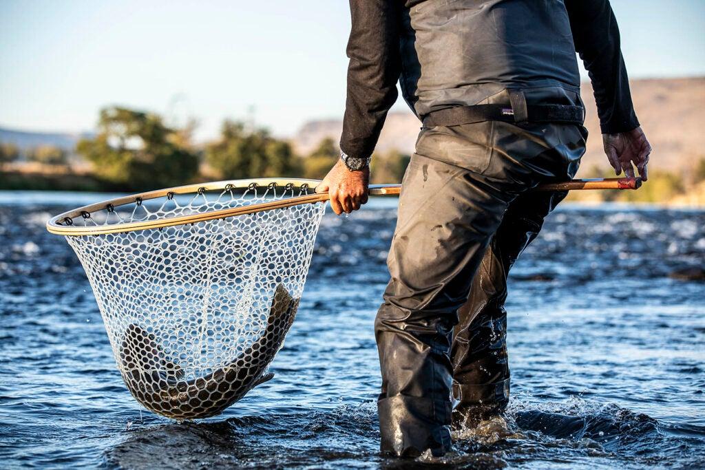 Steelhead in the net