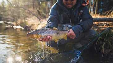 fisherman holding a brown trout with a fly rod on his back.