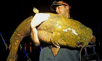 "Joe Granata Catches 64-Pound ""River Monster"" Flathead Catfish"