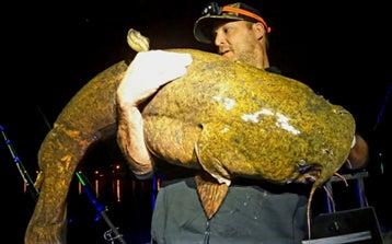Man holds big flathead catfish at night