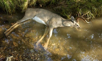 Vermont Confirms EHD in Whitetail Population for First Time Ever
