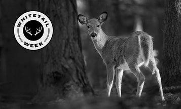 My First Deer: The Deerlet