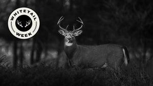My First Deer: The Gift Buck