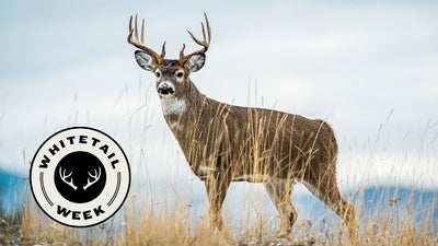 The Best Days of the 2021 Whitetail Rut