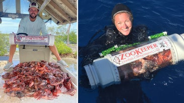 left: man sits on cooler with many dead lionfish. Right: Female diver with plastic tube filled with lionfish