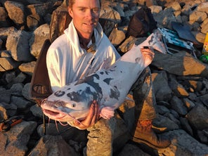 """""""Holy Cow!"""" Piebald Catfish Caught On the Mississippi River"""