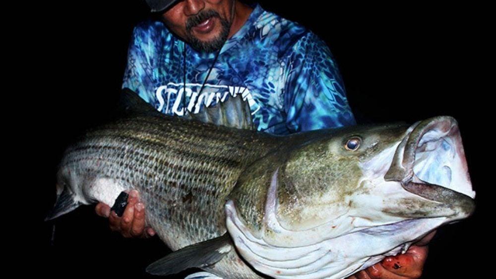 Alberto Knie with a striped bass