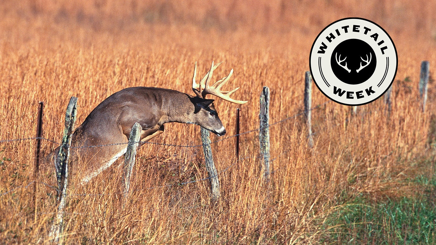 Whitetail Buck jumping over a fence